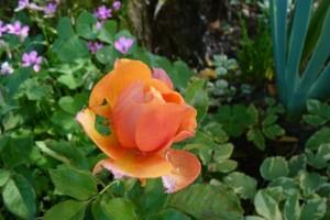 Fleurs d automne 13 oct 2013 016