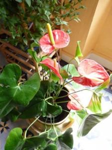 fleurs Deux Pins 8 mai 13 illustr poeme Racines et des ailes Polynesie