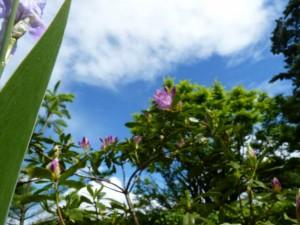 fleurs en beaute aux Deux Pins 1er et 2 mai 2014 017 illust une mere soudanaise