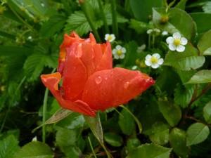 fleurs en beaute aux Deux Pins 1er et 2 mai 2014 021