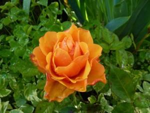 fleurs en beaute aux Deux Pins 1er et 2 mai 2014 020
