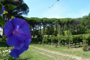 Vignobles dans le Tarn 27 sep 2013