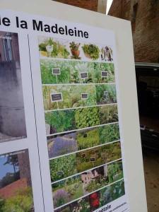 travaux eglise  Madeleine Albi 5 sept 2014 013
