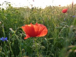 Gaillac 25 mai 2012 087