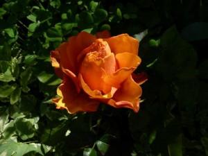 fleurs en beaute aux Deux Pins 1er et 2 mai 2014 001