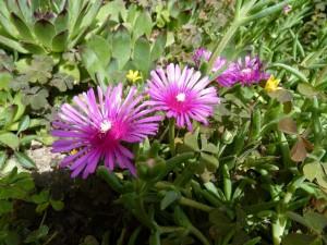 Iris azalee seringat 30 avr 2014 013