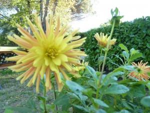 ND des Vignes + fleurs  et baies d'automne 27 oct 2010 055