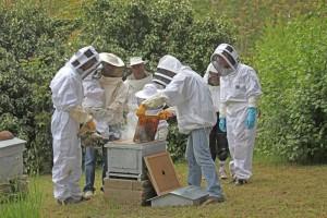 Sortie nature_découverte de l'apiculture