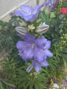 fleurs 2 Pins Wiko 17 mai 2015 (4)
