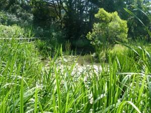 Echappee verte Rochegude 3 juin 2015 008