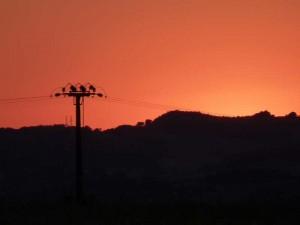 coucher soleil  2 Pins 9 juil 2015 006