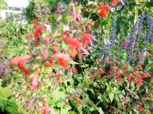 Graulhet 25 sep 2015 jardin Omnisports (21)