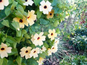 Graulhet 25 sep 2015 jardin Omnisports (22)