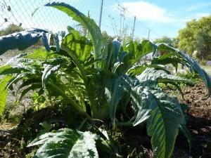 Graulhet jardins partages 17 oct 2015 (11)