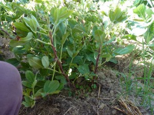 Graulhet jardins partages 17 oct 2015 (6)