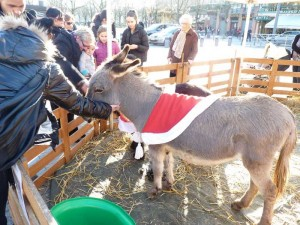 Albi 19 dec 2015 marche Noel (7)
