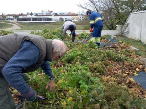 Graulhet vegetal antipollution (3)
