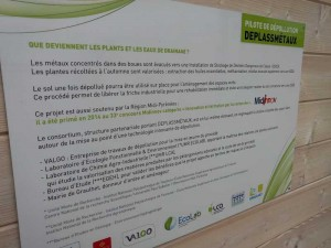 Graulhet vegetal antipollution (5)