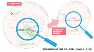 crispr-cas9-genome-humain1