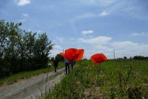 Rando paysagere Cinefeuille Donnazac 25 mai 2016 (124)