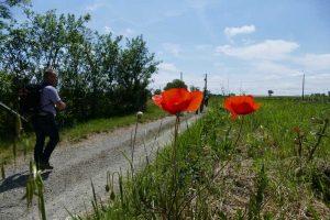 Rando paysagere Cinefeuille Donnazac 25 mai 2016 (125)