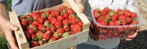 fraiseMontdragon26mai2016 ter