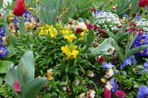 Albi cathedrale et fleurs 5avril 2016 (7)