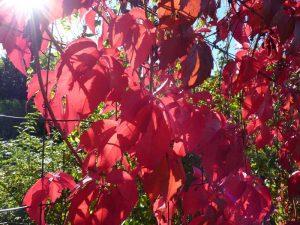 2015-10-09-automne-graulhet-rte-castres-4
