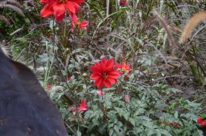 albi-cong-hortis-5-oct-2016-vis-jardins-19