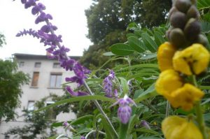 albi-cong-hortis-5-oct-2016-vis-jardins-24
