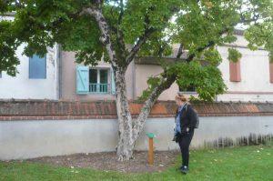 albi-cong-hortis-5-oct-2016-vis-jardins-32
