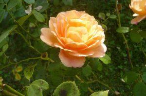 albi-cong-hortis-5-oct-2016-vis-jardins-35