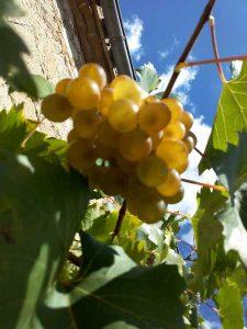 nd-des-vignes-vendanges-18-09-2015-5